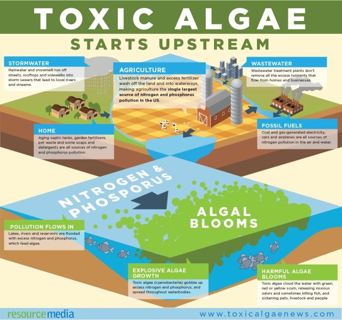RM_Toxic Algae Infographic FIN