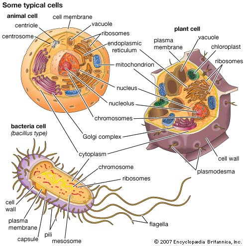 cell_types