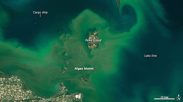 A vast Lake Erie algae bloom returns, captured by a NASA satelite on July 28. NASA/Earth Observatory